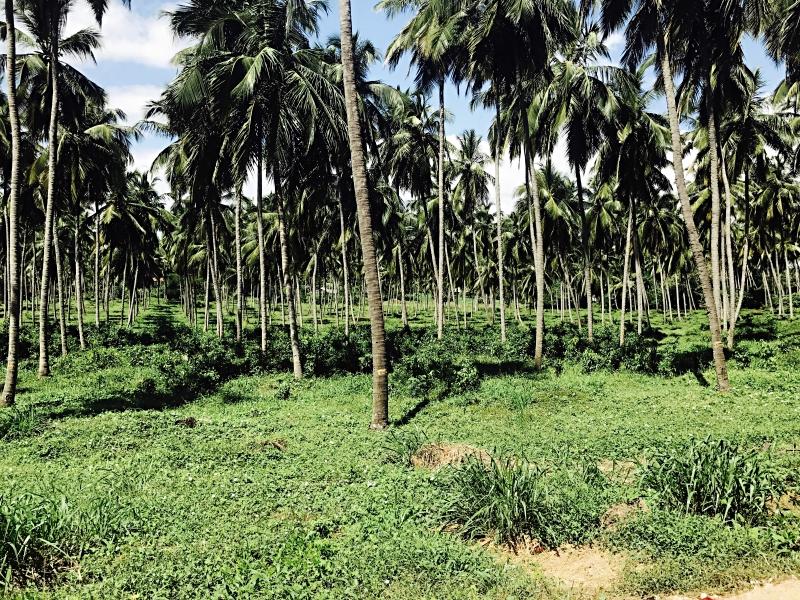 Ulpotha jungle