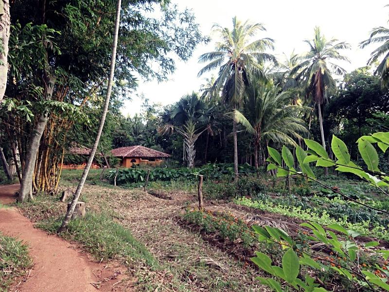 Ulpotha village path