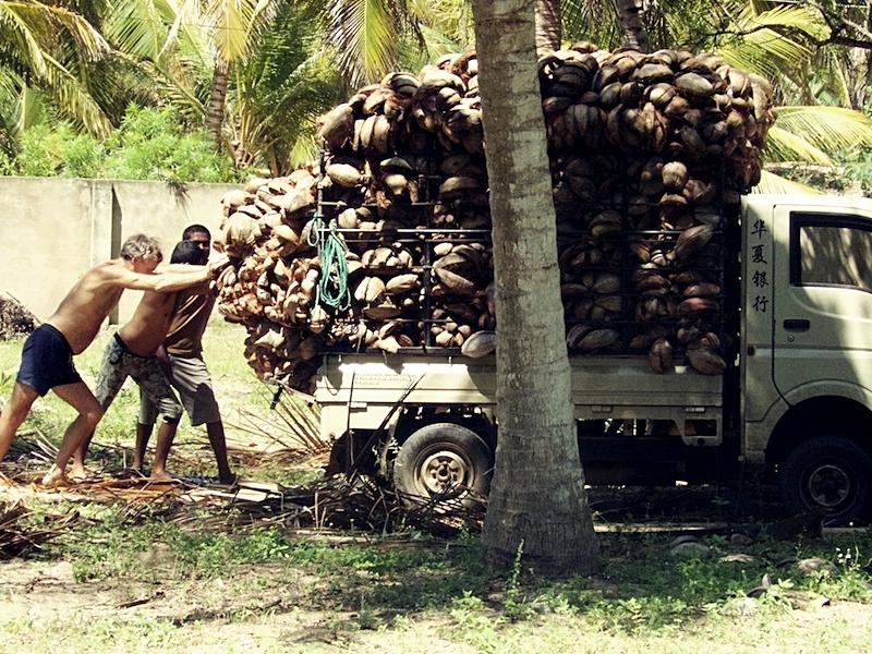 Mamboz Beach Matthew coconut truck